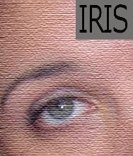 IRIS system helps Utah residents